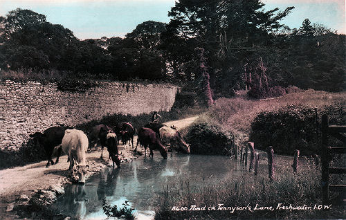 Pond in Tennyson Lane, Freshwater
