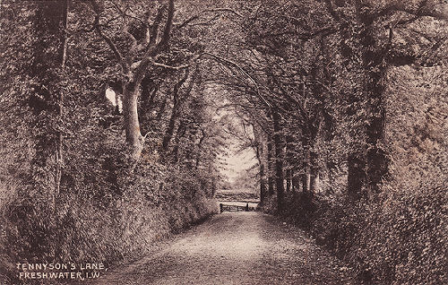 Tennyson Lane, Freshwater